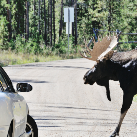 watch for animals on roads